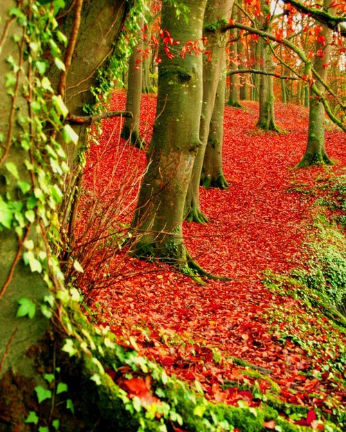 Autumn Forest, Dublin, Ireland