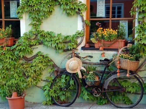 Flower Shop, Provence, France