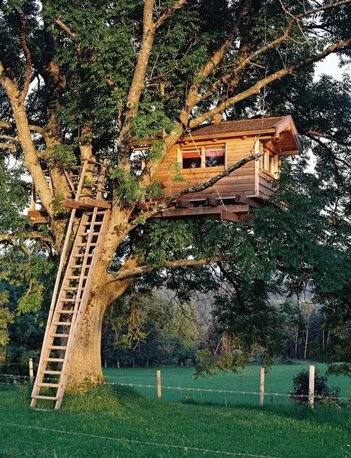 Ladder Treehouse, Marin, California
