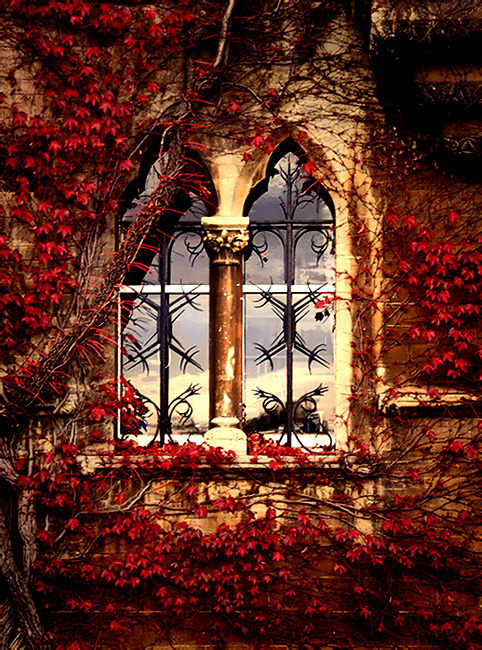 Ivy Window, Oxford, England