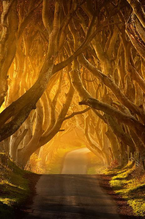 The Dark Hedges, Antrim, Ireland