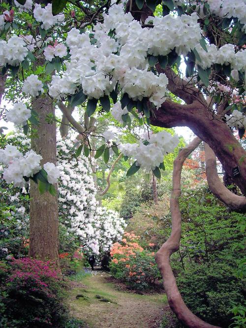 Leonardslee Gardens, Sussex, England