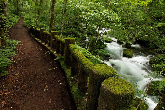 Trail of Oirase River in Aomori Prefecture, Japan