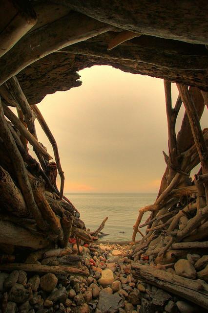 Driftwood, Swansea, Toronto, Canada