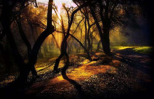 Dark Forest, Moldova