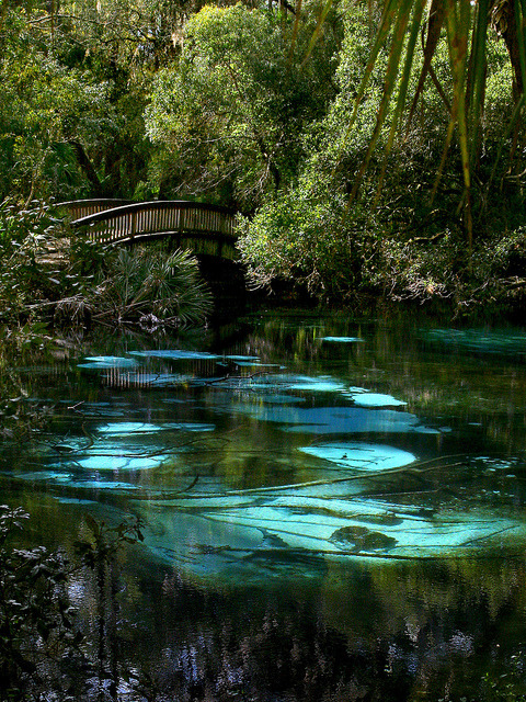 Fern Hammock Springs in North-Central Florida, USA