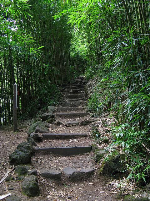 Bamboo Forest along the Pipiwai Trail, Hawaii, USA