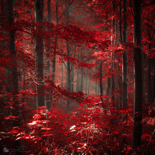 Crimson Forest, Hungary