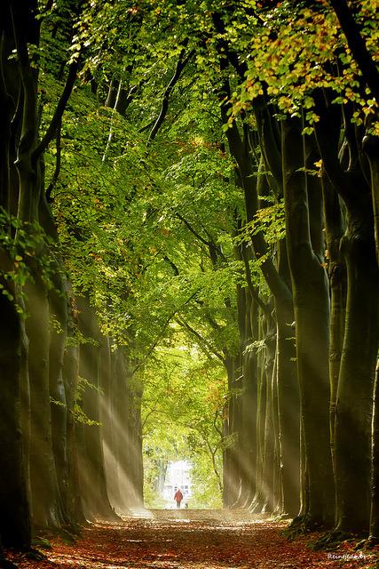 Autumn lights, Groningen, The Netherlands