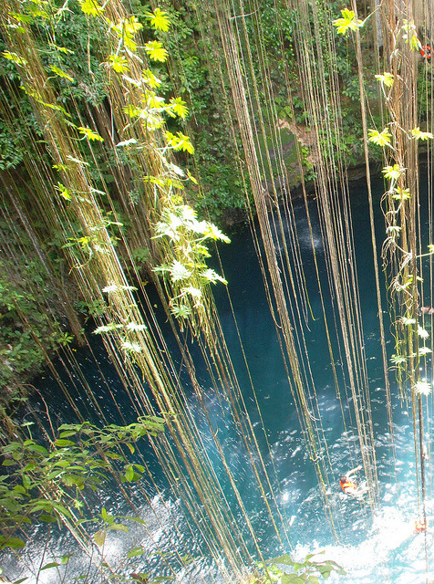 Curtain of vines and blooms at Ik-Kil Cenote, Mexico
