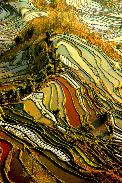 Yuanyang Rice Terraces in Yunnan, China