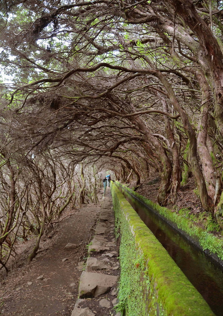 Levada walk to 25 Fontes in Madeira Island, Portugal