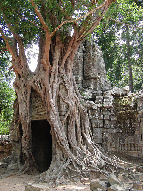 Ta Som Temple at Angkor Wat complex, Cambodia