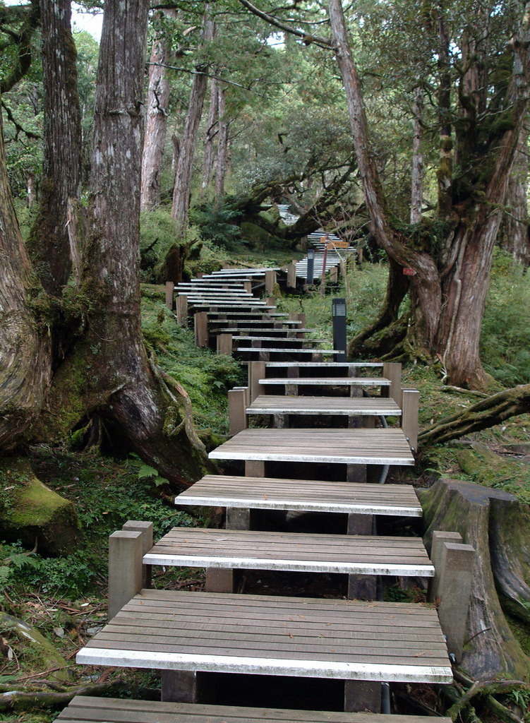 Wooden trails in Taipingshan National Forest, Taiwan