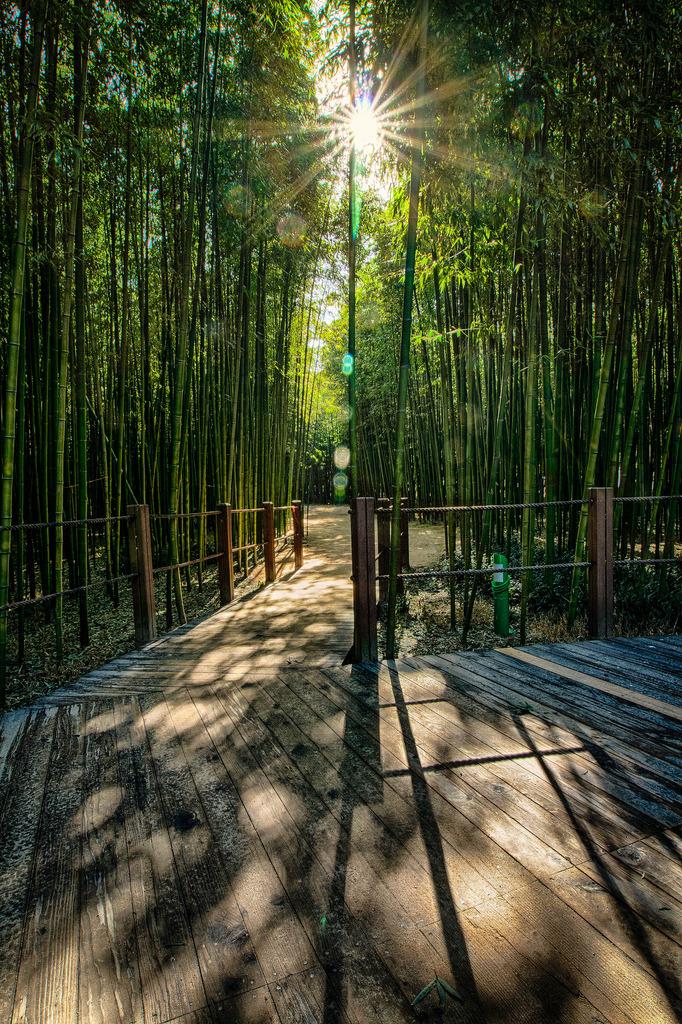 Taehwa River Seepri Bamboo Grove, Ulsan
